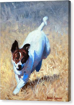 Jack Russell Bounce Canvas Print