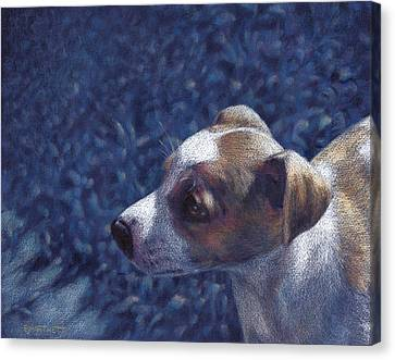 Canvas Print featuring the drawing Jack Russell Terrier On Blue by Ben Hartnett