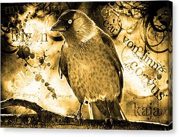 Jackdaw Canvas Print by Tommytechno Sweden