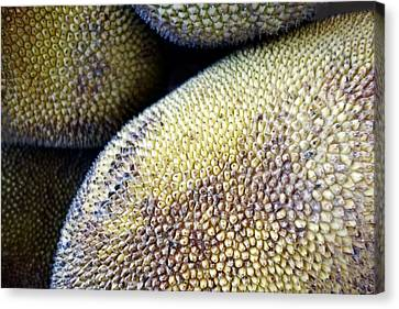 Jackfruit Canvas Print by Ann Powell