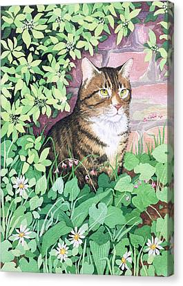 Jackie's Cat Canvas Print