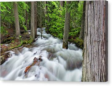 Flooding Canvas Print - Jackson Creek In Glacier National Park by Chuck Haney