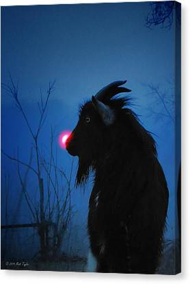 Jacob The Red Nosed Billy Canvas Print by Matt Taylor