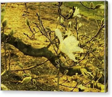 Jade Orchid Canvas Print by Sonali Gangane