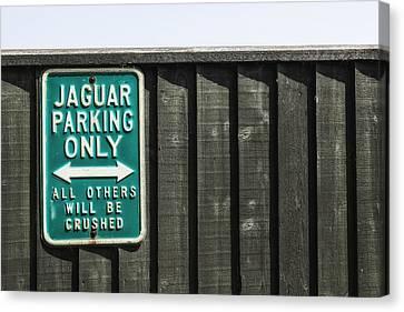 Jaguar Car Park Canvas Print by Joana Kruse