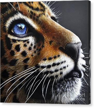 Jaguar Cub Canvas Print by Jurek Zamoyski