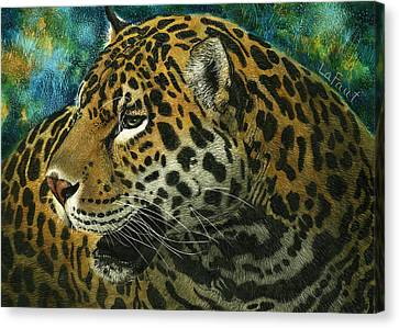 Jaguar Canvas Print by Sandra LaFaut