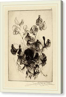 James David Smillie, Sweet Peas, American Canvas Print by Litz Collection