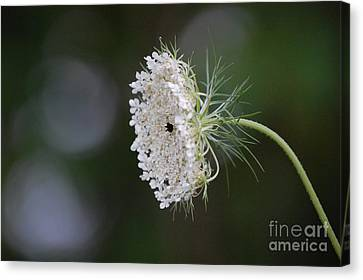 jammer Garden Lace 2 Canvas Print by First Star Art