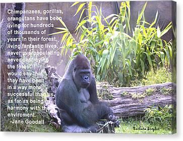 Jane Goodall Gorilla Canvas Print by Barbara Snyder