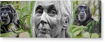 Chimpanzee Canvas Print - Jane Goodall by Simon Kregar