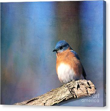 January Bluebird Canvas Print