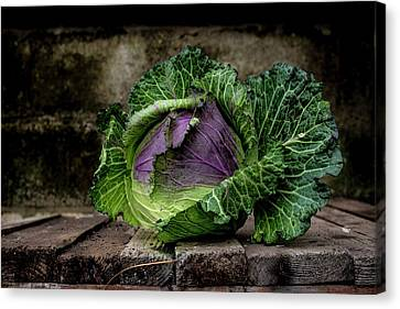 January King Cabbage Canvas Print
