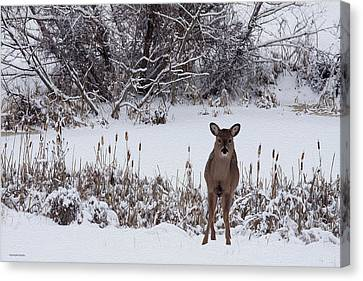 January Visitors Canvas Print by Ron Jones