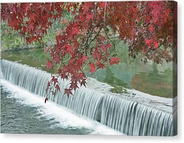 Japan, Kyoto, Arashiyama, Maple Leaves Canvas Print