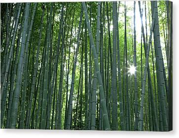 Japan, Kyoto Sunburst Canvas Print