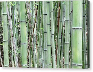 Japan, Nara Provence, Heguri-cho Canvas Print by Jaynes Gallery