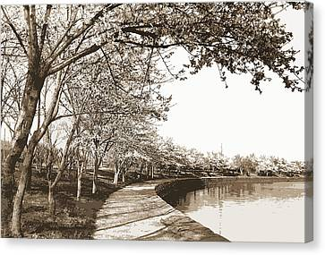 Japanese Cherry Blossoms, Cherry Trees, Waterfronts Canvas Print by Litz Collection