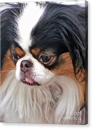 Japanese Chin Dog Portrait Canvas Print by Jim Fitzpatrick