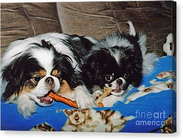 Japanese Chin Dogs Hanging Out Canvas Print by Jim Fitzpatrick