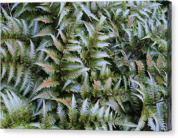 Canvas Print featuring the photograph Japanese Ferns by Kathryn Meyer
