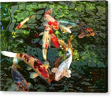 White Canvas Print - Japanese Koi Fish Pond by Jennie Marie Schell