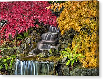 Japanese Laced Leaf Maple Trees In The Fall Canvas Print by David Gn