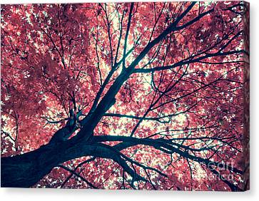 Japanese Maple - Vintage Canvas Print by Hannes Cmarits