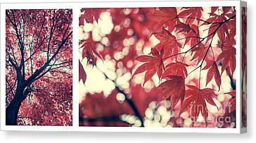 Japanese Maple Collage Canvas Print by Hannes Cmarits