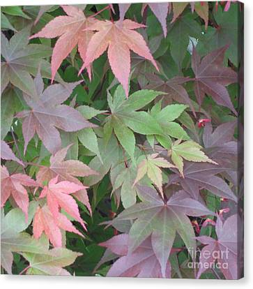 Japanese Maple Leaves Canvas Print by Christina Verdgeline