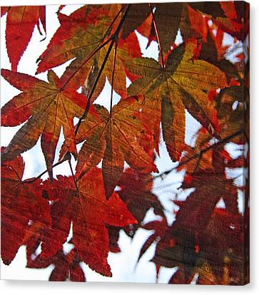 Canvas Print featuring the photograph Japanese Maple Leaves With Woodgrain by Brooke T Ryan