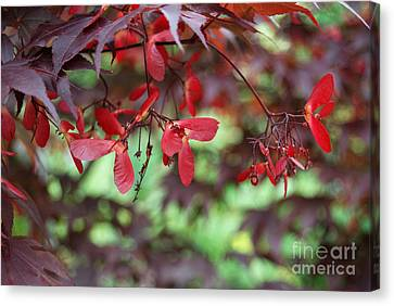 Canvas Print featuring the photograph Japanese Maple Tree by Eva Kaufman