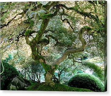 Canvas Print featuring the photograph Japanese Maple Tree II by Athena Mckinzie