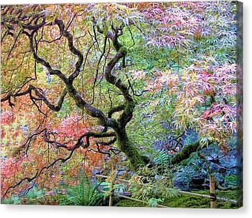 Japanese Maple Canvas Print by Wendy McKennon