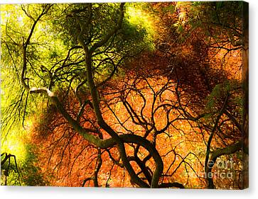 Japanese Maples Canvas Print by Angela DeFrias