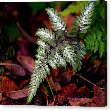Japanese 'metallicum' Fern Canvas Print by Ian Gowland