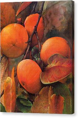 Japanese Persimmon Canvas Print