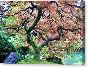 Japanese Tree In Garden Canvas Print by Athena Mckinzie
