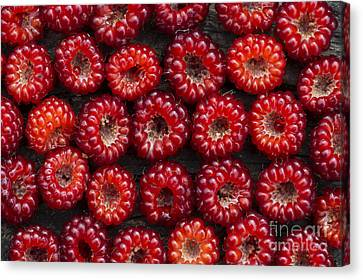Japanese Wineberry Pattern Canvas Print by Tim Gainey