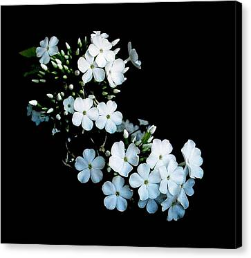 'jasmine Detail' Canvas Print
