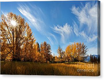 Jasper - Autumn Sky Chief Canvas Print