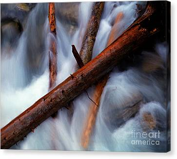 Jasper - Beauty Creek Logs Canvas Print by Terry Elniski