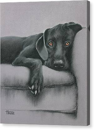 Canvas Print featuring the drawing Jasper by Cynthia House