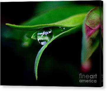 Jasper - Rain Drop Plant Canvas Print