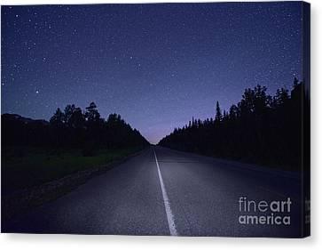 Jasper Starry Night Canvas Print by Dan Jurak