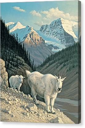 Mountain Goat Canvas Print - Jaspergoats by Paul Krapf