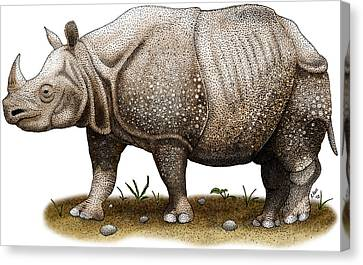 Javan Rhinoceros Canvas Print