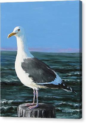 Jeff The Seagull Canvas Print by Jack Skinner