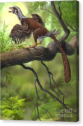 Jeholornis Prima Perched On A Tree Canvas Print by Sergey Krasovskiy