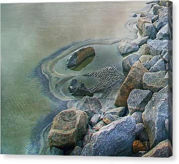 Jekyll Island Tidal Pool Canvas Print by Betsy Knapp
